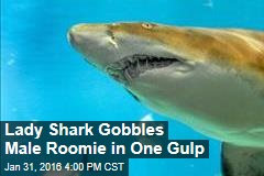 Lady Shark Gobbles Male Roomie in One Gulp
