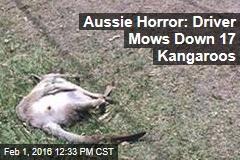 Aussie Horror: Driver Mows Down 17 Kangaroos