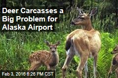 Deer Carcasses a Big Problem for Alaska Airport