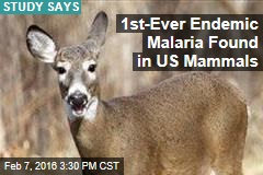 American Deer Rife With Malaria