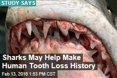 Study: Sharks May Help Make Human Tooth Loss History