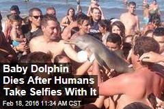 Baby Dolphin Dies After Humans Take Selfies With It