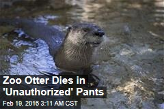 Zoo Otter Dies in 'Unauthorized' Pants