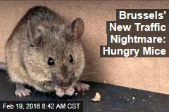 Brussels' New Traffic Nightmare: Hungry Mice
