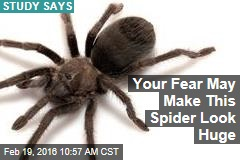 Your Fear May Make This Spider Look Huge