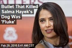 Bullet That Killed Salma Hayek's Dog Was 'Fluke'