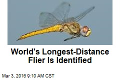World's Longest-Distance Flier Is Identified