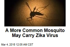 More Common Mosquito May Carry Zika Virus