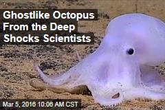 Ghostlike Octopus From the Deep Shocks Scientists