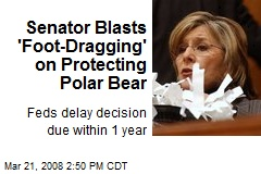 Senator Blasts 'Foot-Dragging' on Protecting Polar Bear