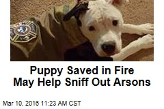 Puppy Saved in Fire May Help Sniff Out Arsons