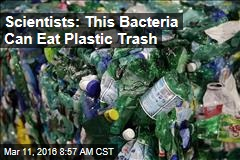 Scientists: This Bacteria Can Eat Plastic Trash
