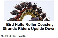 Bird Halts Roller Coaster, Strands Riders Upside Down