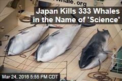 Japan Kills 333 Whales in the Name of 'Science'