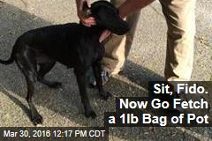 Sit, Fido. Now Go Fetch a 1lb Bag of Pot