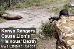 Kenya Rangers Cause Lion's 'Heinous' Death