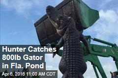 Hunter Catches 800lb Gator in Fla. Pond