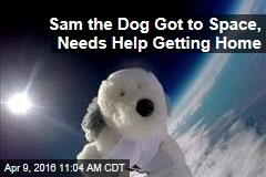 Sam the Dog Got to Space, Now He Needs Help Getting Home