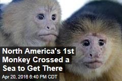 North America's 1st Monkey Crossed a Sea to Get There