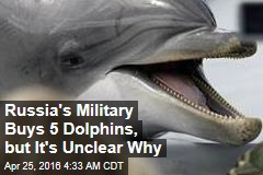 Russia's Military Buys 5 Dolphins, but It's Unclear Why