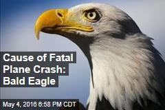 Cause of Fatal Plane Crash: Bald Eagle