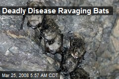 Deadly Disease Ravaging Bats