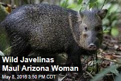 Wild Javelinas Maul Arizona Woman