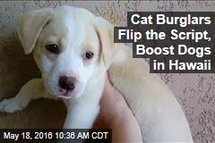 Cat Burglars Flip the Script, Boost Dogs in Hawaii