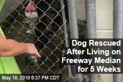 Dog Rescued After Living on Freeway Median for 5 Weeks