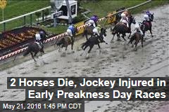 2 Horses Die, Jockey Injured in Early Preakness Day Races