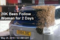 20K Bees Follow Woman for 2 Days