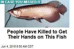 People Have Killed to Get Their Hands on This Fish