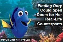 Finding Dory Could Spell Doom for Her Real-Life Counterparts