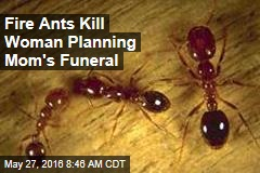 Fire Ants Kill Woman Planning Mom's Funeral
