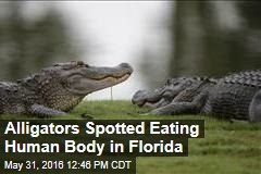 Alligators Spotted Eating Human Body in Florida
