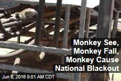 Monkey See, Monkey Fall, Monkey Cause National Blackout