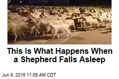 This Is What Happens When a Shepherd Falls Asleep