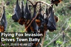 Flying Fox Invasion Drives Town Batty