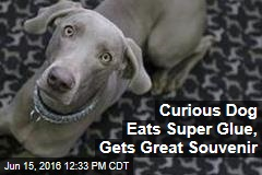 Curious Dog Eats Super Glue, Gets Great Souvenir