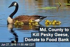 Md. County to Kill Pesky Geese, Donate to Food Bank