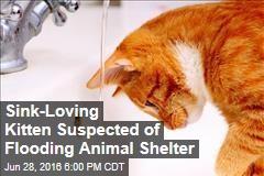 Sink-Loving Kitten Suspected of Flooding Animal Shelter