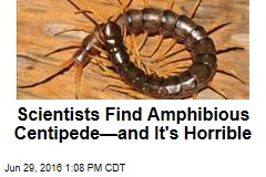 Scientists Find Amphibious Centipede—and It's Horrible