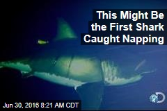 This Might Be the First Shark Caught Napping