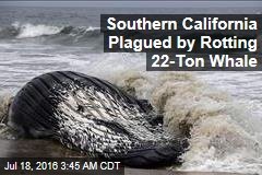 Same Dead Whale Washes Up in Calif. Yet Again