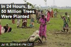 In 24 Hours, 50 Million Trees Were Planted