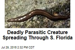 Deadly Parasitic Creature Spreading Through S. Florida
