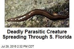 Deadly Parasitic Creature Spreading Through S. Florida