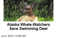 Alaska Whale-Watchers Save Swimming Deer