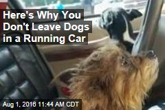 Here's Why You Don't Leave Dogs in a Running Car