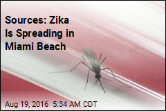 Sources: Zika Is Spreading in Miami Beach